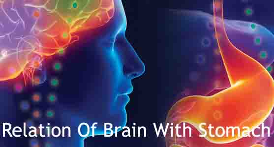 Relation Of Brain With Stomach Concerning Health
