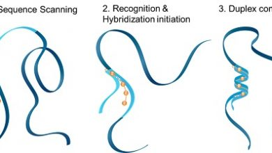 Photo of Kinetics of molecular Hybridization