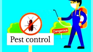 Photo of Best pest control in Philadelphia